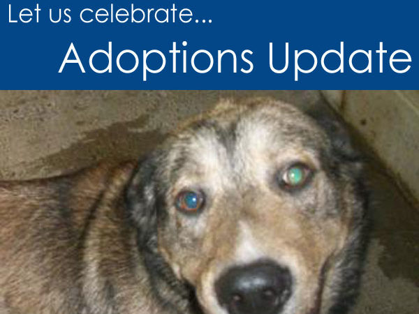 Adoption Update for the week of October 21 to 28, 2012
