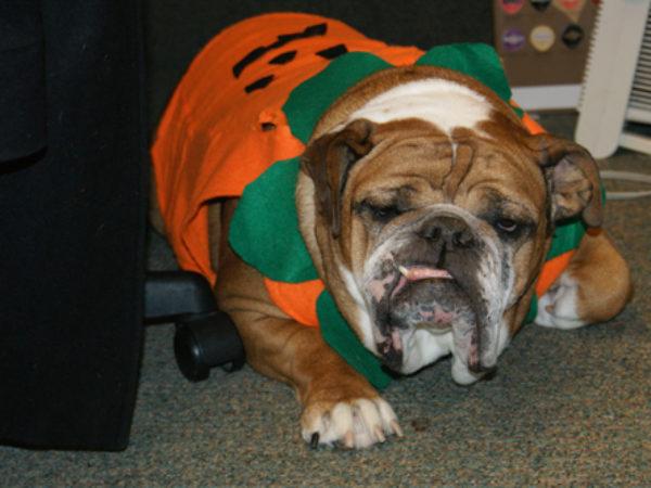 Roxy the Pumpkin