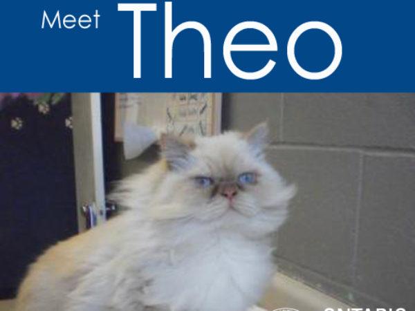 Meet Theo