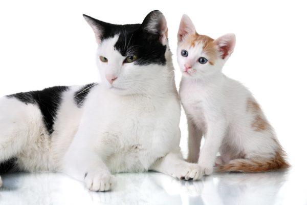 Older cat with kitten