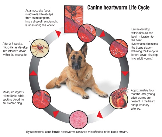 Heartworm Awareness