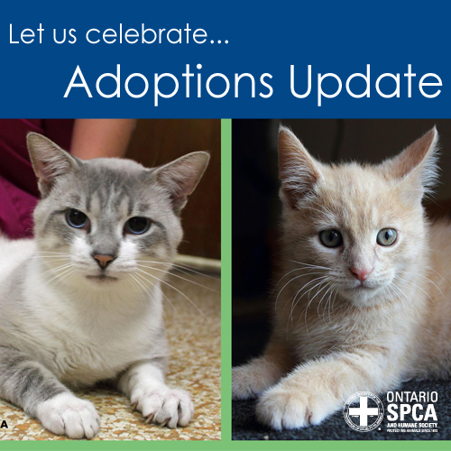 Toby and Sinatra have been adopted from the Ontario SPCA Lennox & Addington Branch.