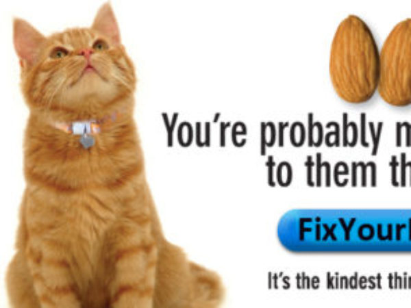 Fix Your Pet campaign cat banner