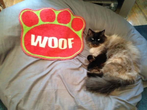 Cat on large dog bed