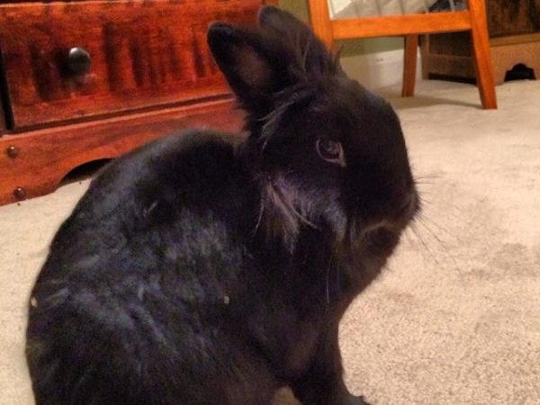 Rabbit sitting on the floor