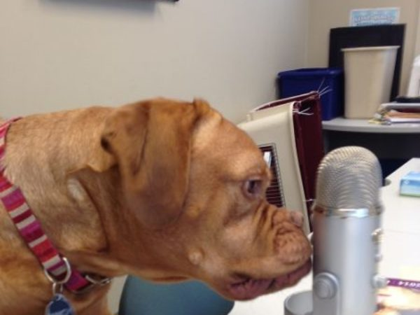 Dog with podcast microphone