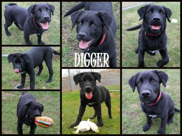 Adoption update on digger