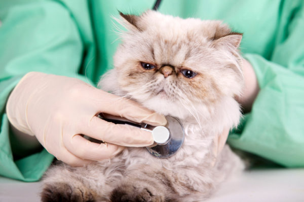 cat at veterinarian visit