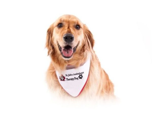 Harley the therapy dog