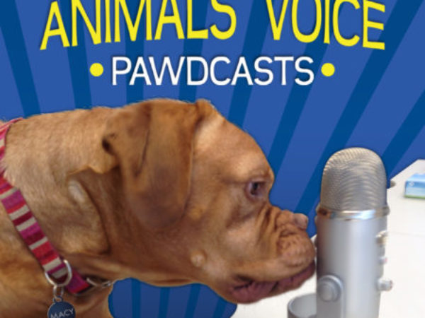 Ontario SPCA Animals' Voice Pawdcast Season Four Logo