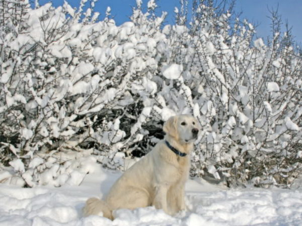 dog sitting in snow in the winter