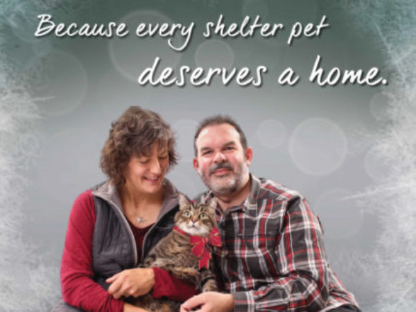 iAdopt for the Holidays cat poster