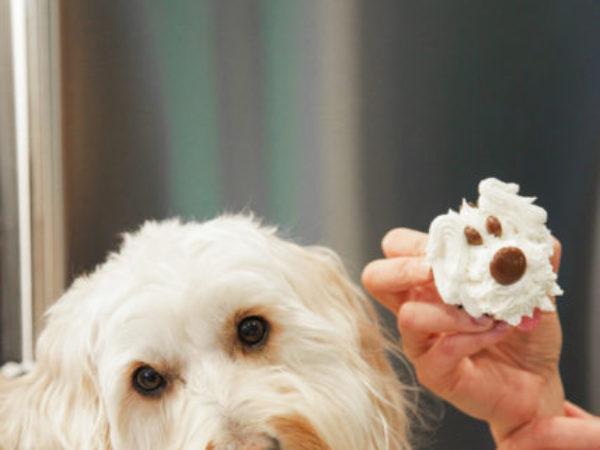 Anna Olson's dog with puppy cupcake