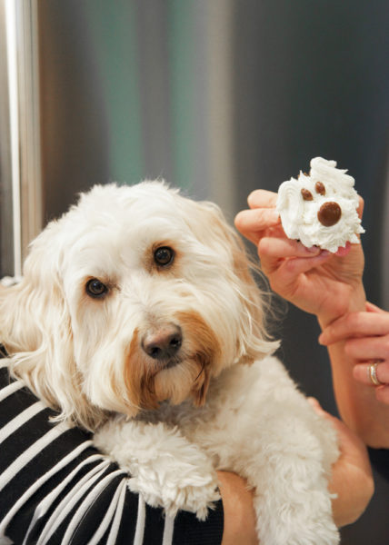 Anna Olson's dog with a cupcake