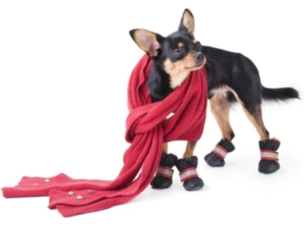 dog in long scarf and booties
