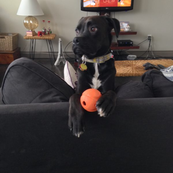 dog holding a ball between his paws