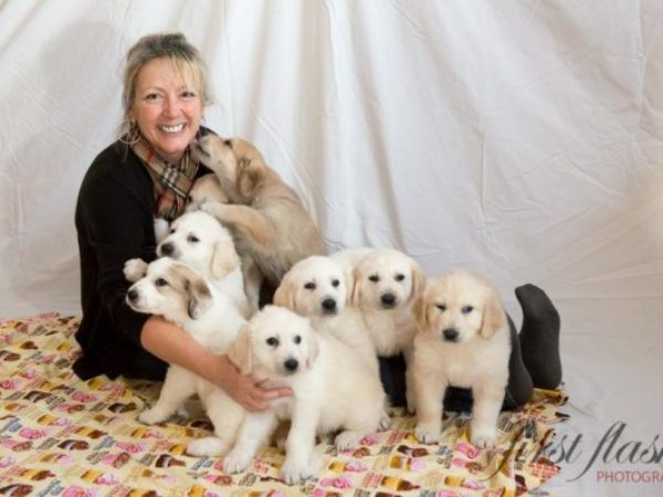 Foster mom with eight puppies in Renfrew
