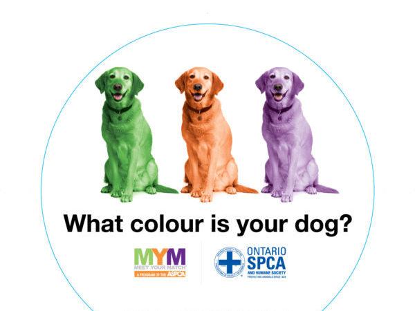 Meet Your Match Canine Sticker