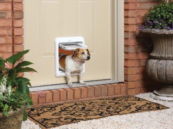 dog using dog door