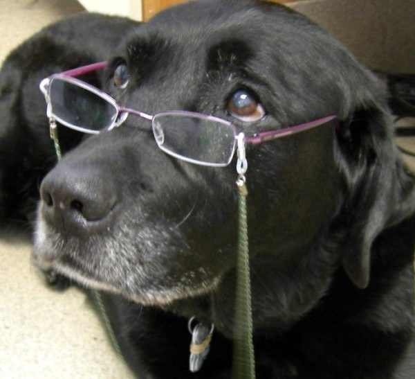 Senior dog wearing glasses