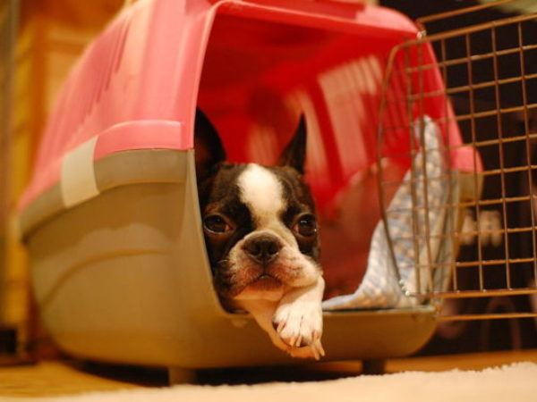 crate training, dog