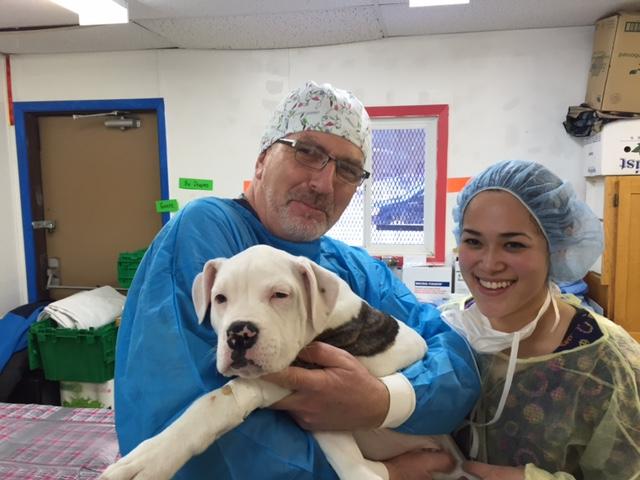 Ontario SPCA & community organizations partner with ...