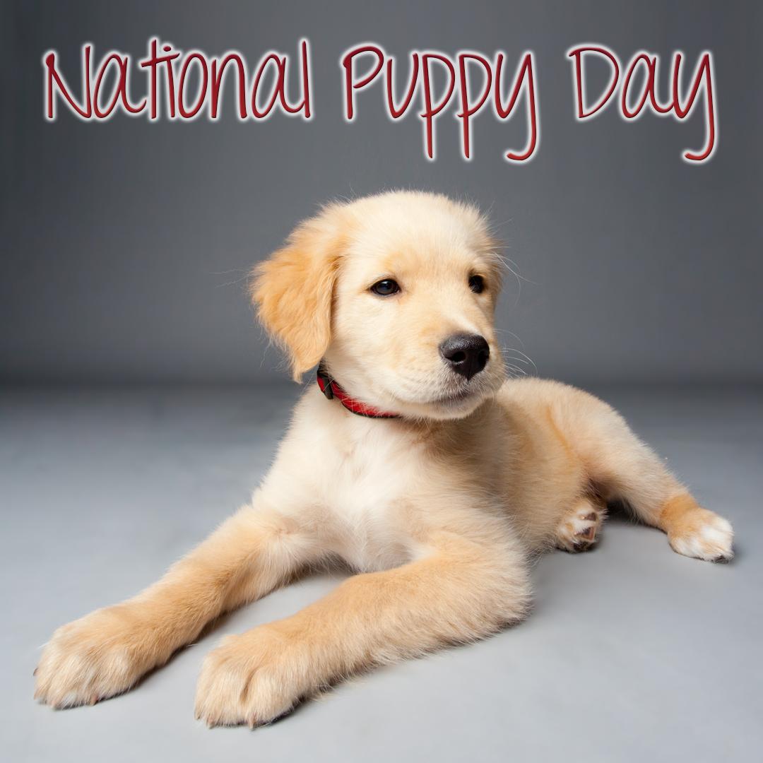 puppy, puppies,