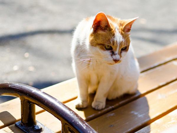 cat, abandoned animal,