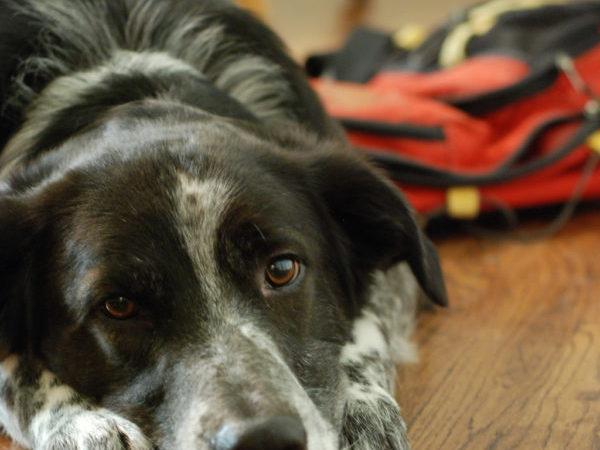 dog packpack, dog walks,