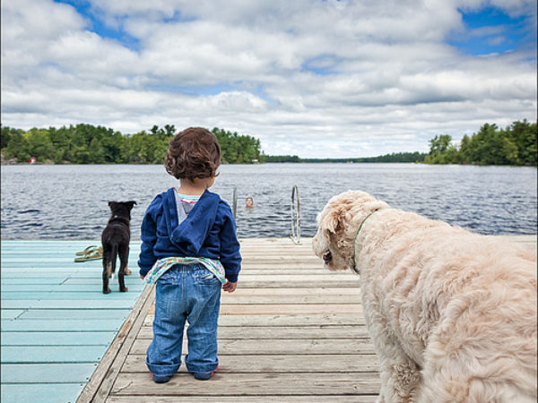 cottage pet safety