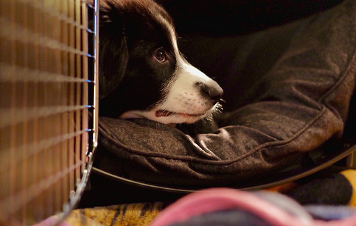 Shelter Health Pro: Animal transport guidelines - Ontario