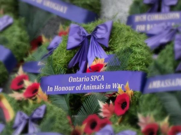 animals in war, wreath, National Remembrance Day Ceremony