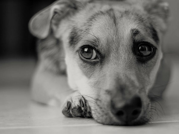 grieving a pet, grief recovery method