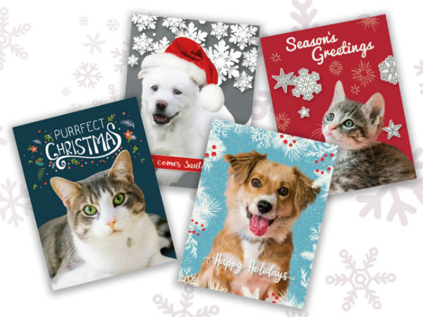 Holiday Cards, gifts that give back