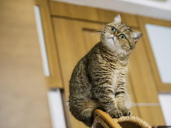 cat, cats, cat care, feral cats