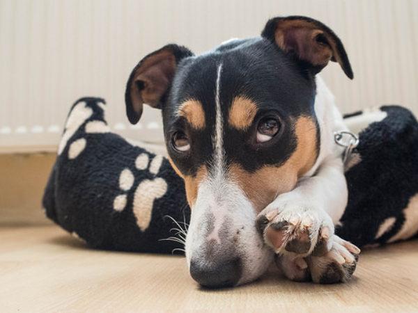 house training, dog, punishment