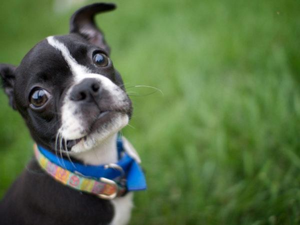 dogs, dog, puppy, dog ownership