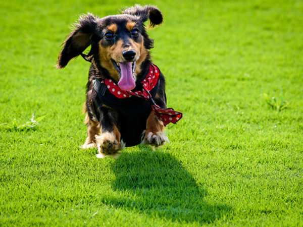 ontario spca, earth day, go green, pet owners, pets