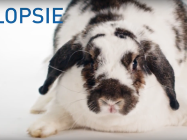 Flopsie, may second Chances Calendar Star, video, bunny