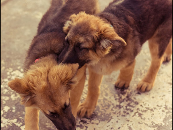 dog fight, dogs fighting, tips, pet safety