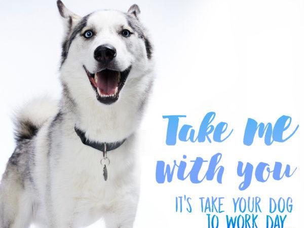 Take Your Dog to Work Day, mars canada, Chris Hamilton