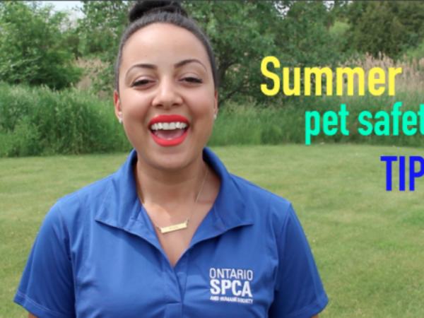 summer, pet safety, tips, pet tips