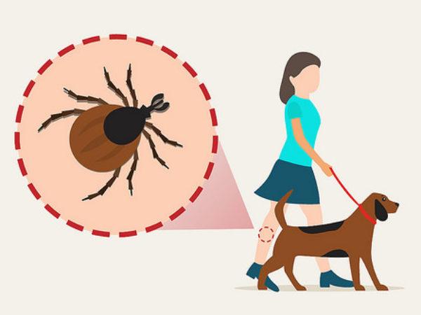 tick, ticks, how to remove