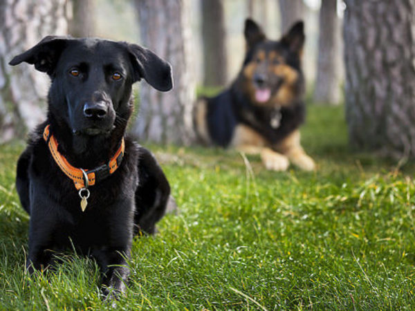 dogs, labour day, safety tips