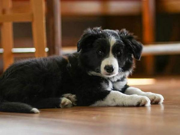 dog, parvo, behind the scenes