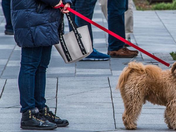 dog walker, dogs, dog
