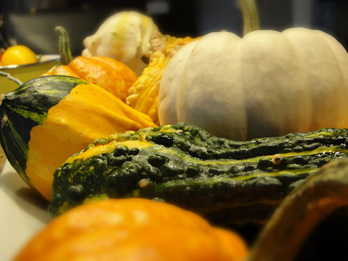 gourds, decorations, pet safety, thanksgiving