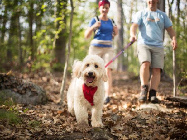 Kurgo, hiking with pets