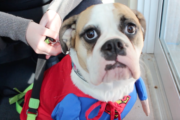 pet safety, costume, halloween, pet costumes