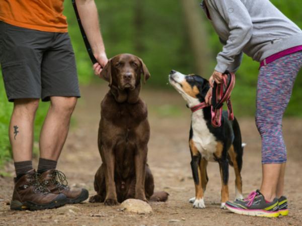 kurgo, running with your dog, dog, dogs, running, exercise